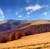 Colorful autumn landscape Stock Image