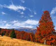 Colorful autumn landscape Royalty Free Stock Image