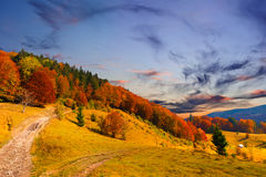 Colorful autumn landscape Royalty Free Stock Photography