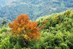 Colorful autumn landscape. In Taiwan Royalty Free Stock Images
