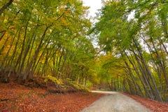 Colorful autumn landscape Stock Photos