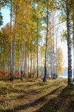 Colorful autumn landscape. Royalty Free Stock Photos