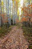 Colorful autumn landscape. Royalty Free Stock Image