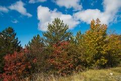 Colorful autumn landscape Royalty Free Stock Photos