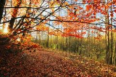 The colorful autumn Landscape Stock Image