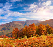 Colorful autumn landscape in the Carpathian mountains Royalty Free Stock Images
