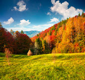 Colorful autumn landscape in the Carpathian mountains Stock Image