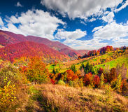 Colorful autumn landscape in the Carpathian mountains. Stock Images