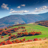 Colorful autumn landscape in Carpathian mountains. Royalty Free Stock Photos