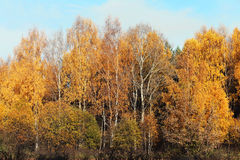 Colorful autumn landscape, forest background Royalty Free Stock Photo