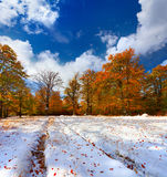 Colorful autumn landscape in the forest Royalty Free Stock Photo