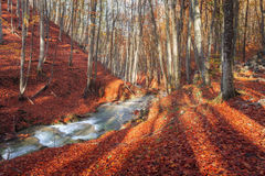 Colorful autumn landscape with forest and mountain river Royalty Free Stock Photo