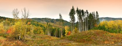 Colorful autumn landscape in the forest on the Tuscan mountains royalty free stock images