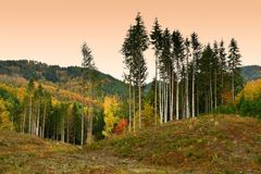 Colorful autumn landscape in the forests on the Tuscan mountains royalty free stock photography