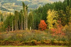 Colorful autumn landscape in the forests on the Tuscan mountains stock images