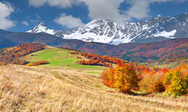 Colorful autumn landscape in high mountains. Stock Images