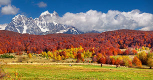Colorful autumn landscape in high mountains. Royalty Free Stock Photos