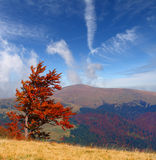 Colorful autumn landscape i Royalty Free Stock Image