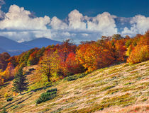 Colorful Autumn Landscape In The Mountains Stock Images