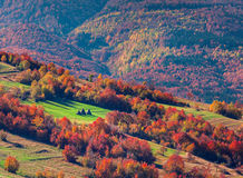 Colorful autumn landscape in the mountain village Royalty Free Stock Images