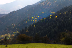 Colorful autumn landscape in the mountain village Royalty Free Stock Image