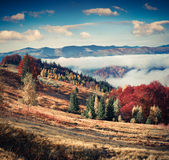 Colorful autumn landscape in the mountain village. Foggy morning Royalty Free Stock Photography