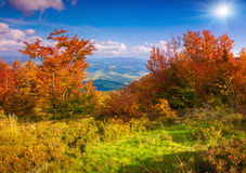 Colorful autumn landscape in mountains Royalty Free Stock Image