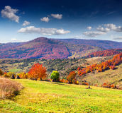 Colorful autumn landscape in the mountains. Royalty Free Stock Photo