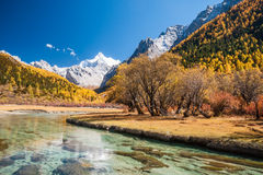 Colorful autumn royalty free stock photography