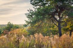 Colorful autumn landscape with pine. Wild pine at fall hill in Ukraine Stock Photo