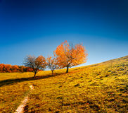 Colorful autumn landscape. Ukraine, Europe Royalty Free Stock Photo