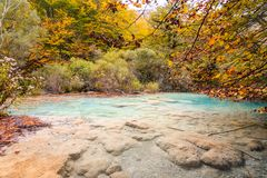 Colorful autumn landscape at urederra source, Spain. Colorful autumnal scene at clear natural spring of urederra Stock Images