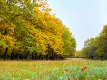 Colorful autumn landscape with yellow and trees. Oak forest. Natural background. Royalty Free Stock Photography