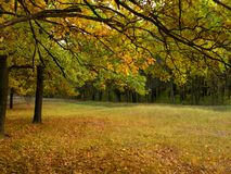 Colorful autumn landscape with yellow and trees. Oak forest. Natural background. Royalty Free Stock Images