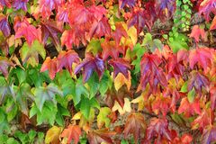 Colorful autumn leaf background Stock Photography