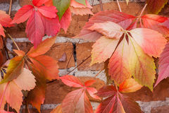 Colorful autumn leaf background. At daytime Royalty Free Stock Image