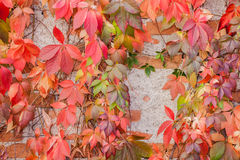 Colorful autumn leaf background. At daytime Stock Photo
