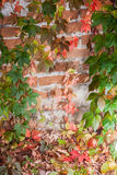 Colorful autumn leaf background. At daytime Stock Images