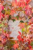 Colorful autumn leaf background. At daytime Royalty Free Stock Images