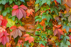 Colorful autumn leaf background Stock Images