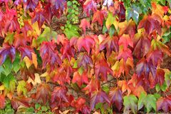 Colorful autumn leaf background Stock Photos