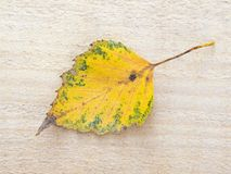 Colorful autumn leaf Stock Photo