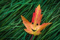 Colorful Autumn Leaf stock images