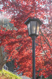 Colorful Autumn Leaf and lamp in Obara, Japan Stock Image