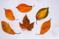 Colorful Autumn Leaf Patterns Royalty Free Stock Images