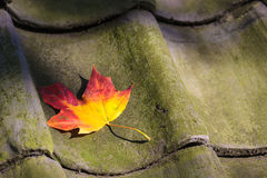 Colorful autumn leaf on a roof Stock Images