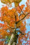 Colorful Autumn Leaf Season Royalty Free Stock Photography