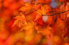 Colorful Autumn Leaf Stock Photos