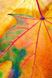Colorful autumn leaf texture Stock Image