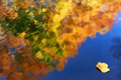Colorful autumn leaf on water Royalty Free Stock Image
